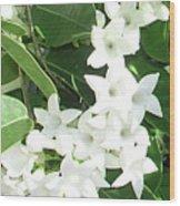 F7 Stephanotis  Flowers Wood Print