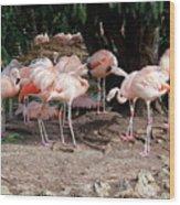 Fabulous Flamingos Wood Print