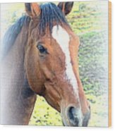 Face The Horse That Is Facing You   Wood Print