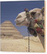 Face Of A Camel In Front Of A Pyramid Wood Print