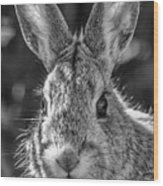Face Of A Rabbit In Black And White Wood Print