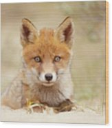 Face Of Innocence - Red Fox Kit Wood Print