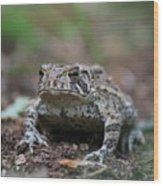 Face To Face With A Fowler Toad  Wood Print