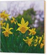 Daffodils Sky Wood Print