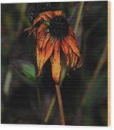 Faded Beauty Wood Print