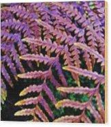 Faded Ferns Wood Print