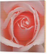 Faded - Perfect Pink Rose Wood Print