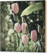 Faded Tulips Wood Print