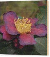 Fading Camellia Wood Print
