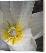 Fading Tulip Wood Print