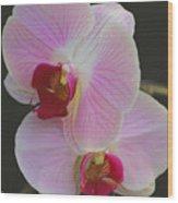 Fairy Blush Orchids Wood Print
