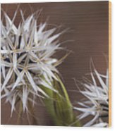 Fairy Flower Wood Print