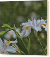 Fairy Iris 2 Wood Print