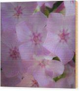 Fairy Tale Phlox Wood Print
