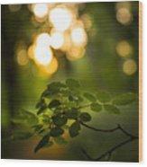 Fairyland Trees Wood Print