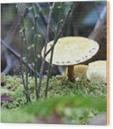 Fairy's Umbrella Wood Print