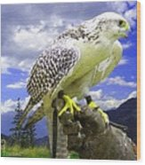 Falcon Being Trained H A Wood Print