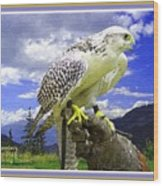 Falcon Being Trained H A With Decorative Ornate Printed Frame. Wood Print