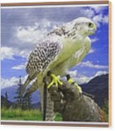 Falcon Being Trained H B With Decorative Ornate Printed Frame. Wood Print