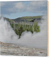 Falcon Over Old Faithful - Geyser Yellowstone National Park Wy Usa Wood Print