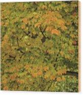 Fall #2 Wood Print