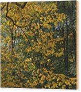 Fall 2010 12 Wood Print
