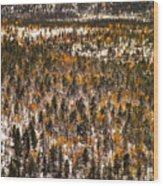Fall And Winter On The Same Day Wood Print