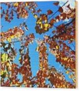 Fall Apricot Leaves Wood Print