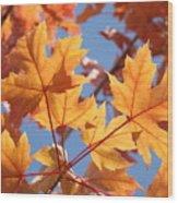 Fall Art Orange Autumn Leaves Blue Sky Baslee Troutman Wood Print