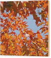 Fall Art Prints Orange Autumn Leaves Baslee Troutman Wood Print