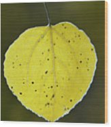 Fall Aspen Leaf Wood Print