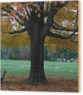 Fall At Maymont Wood Print