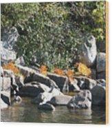 Fall At The Creek Wood Print