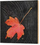 Fall Autumn Leaf On Old Weathered Wood Stump From A Tree Wood Print