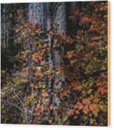Fall Beauty Wood Print