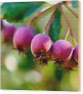 Fall Berries Wood Print