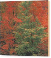 Fall Brilliance Wood Print