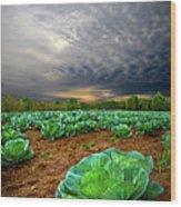 Fall Cabbage Wood Print