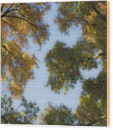 Fall Canopy In Virginia Wood Print