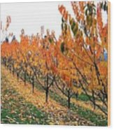 Fall Cherry Orchard Wood Print