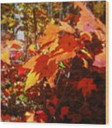 Fall Color 2 Wood Print