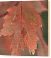Fall Color In Softness Wood Print