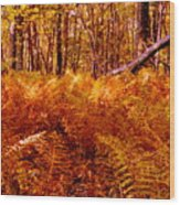Fall Color In The Woods Wood Print