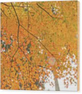 Fall Color Maple Leaves At The Forest In Aichi, Nagoya, Japan Wood Print