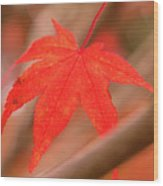 Fall Color Maple Leaves At The Forest In Kamakura, Kanagawa, Jap Wood Print