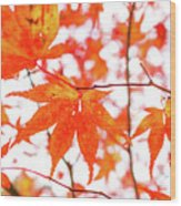 Fall Color Maple Leaves At The Forest In Kumamoto, Japan Wood Print