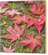 Fall Color Maple Leaves At The Forest In Nikko, Tochigi, Japan Wood Print