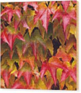 Fall Colored Ivy Wood Print