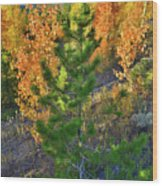 Fall Colors Along Dillon Reservoir Wood Print
