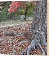 Fall Colors At Lost Maples Wood Print